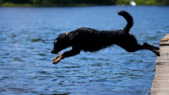 Best Sport dog bumpers