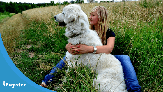 Best Foods for Pyrenean Mountain Dog