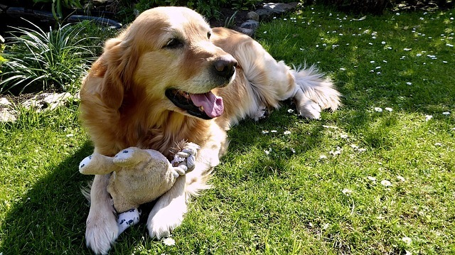 Good toys for golden retrievers