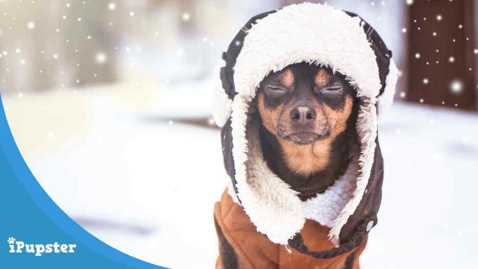 Dog Wearing a Jacket in Winter