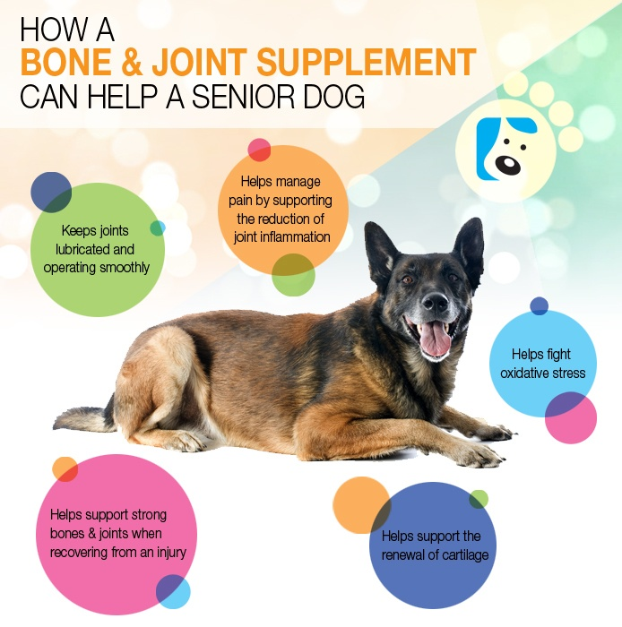 Senior Dog Supplements