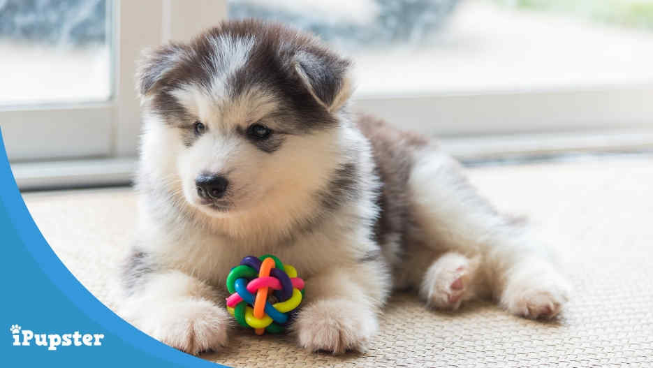 Best Toys for Puppies - A Buyer's Guide