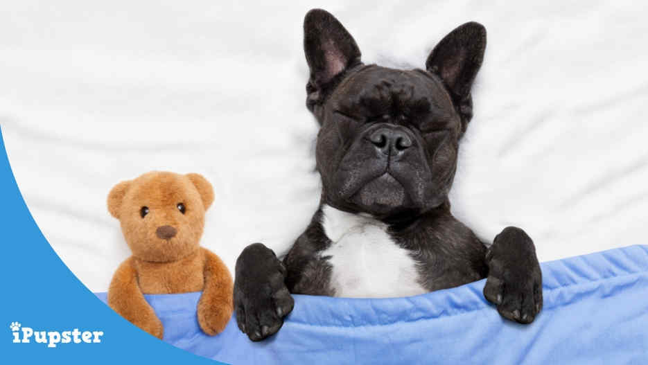 Pet Sleeping Guide for Dogs and Puppies