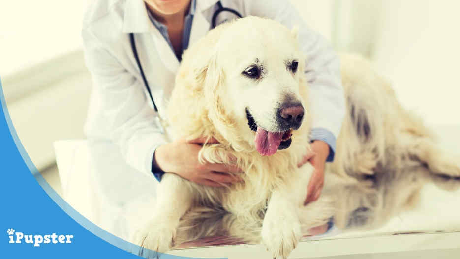 Read about clinical signs and health issues that can be related to hypothyroidism in their pets.
