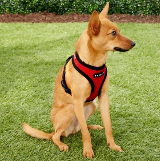 Puppia Dog Harness for Small Dogs