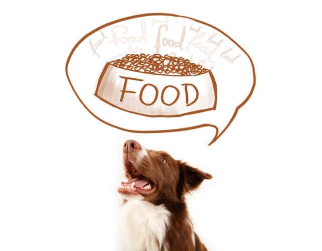 Border Collie's Nutritional Requirements