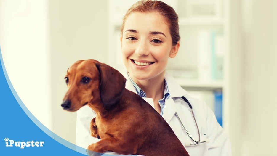 Pet Insurance for Dachshund Dogs