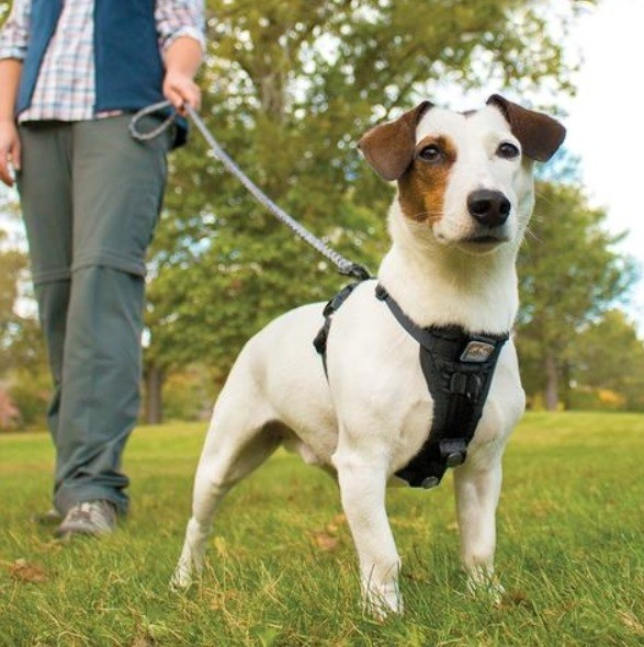 Best Selling Every Dog Harness for Small Dogs