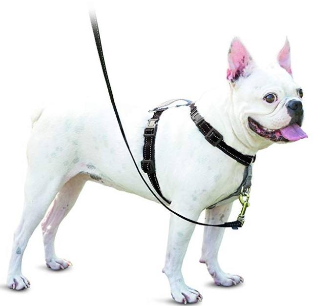 Comfortable and Safe Dog Harness
