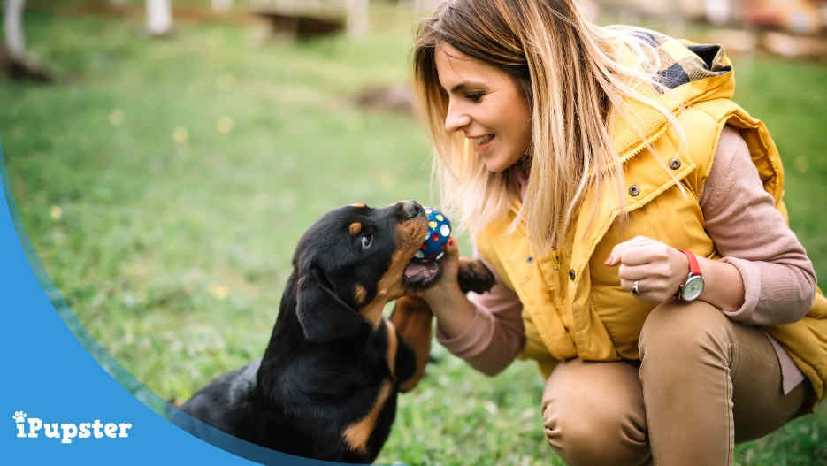 Dog Insurance Coverage for Rottweilers