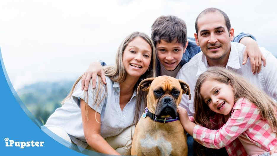 Pet Insurance for Boxer Dogs