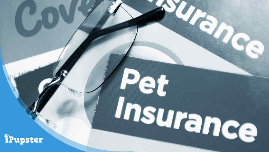Puppy Insurance Plans and Coverage Reviews