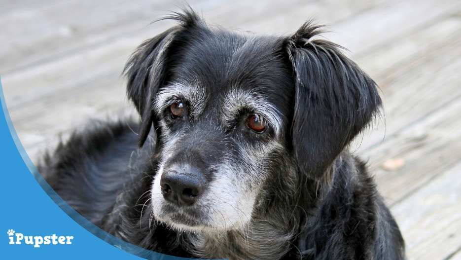 What is the best pet insurance for older dogs?
