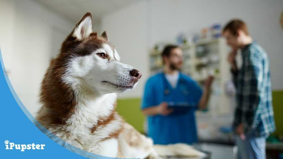 Pet insurance for dogs with pre-existing conditions