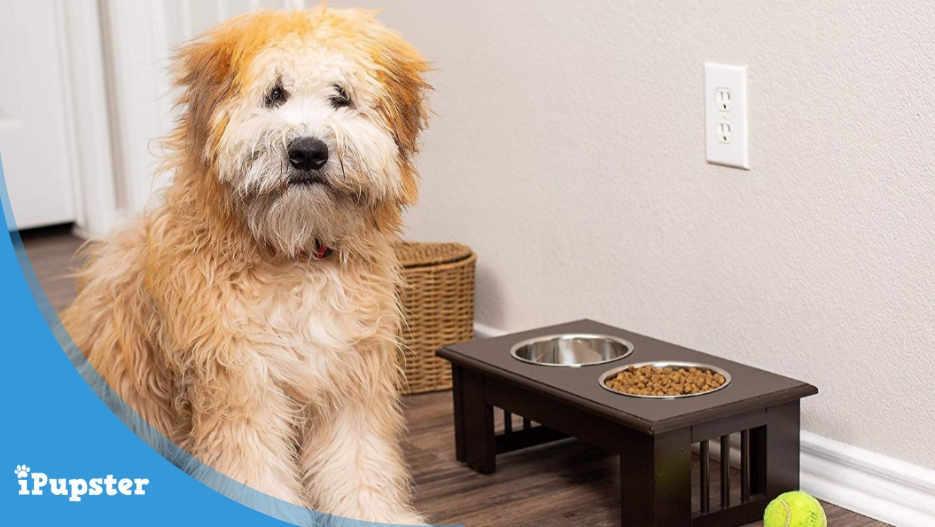 Dog sitting beside raised feeding station.