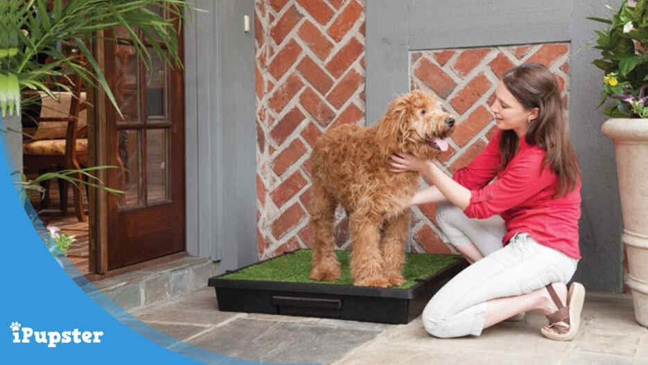 Puppy training on an indoor outdoor dog potty