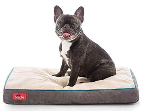 a frenchie sitting on a waterproof memory bed