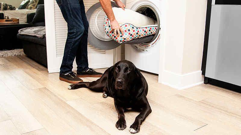Owner putting dog bed in the washing machine