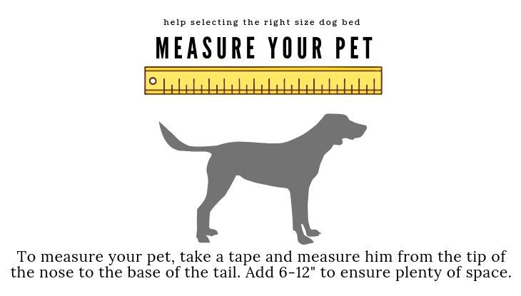 what's the best way to measure dog for bed