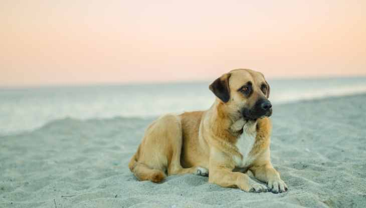 Dog resting on the beach