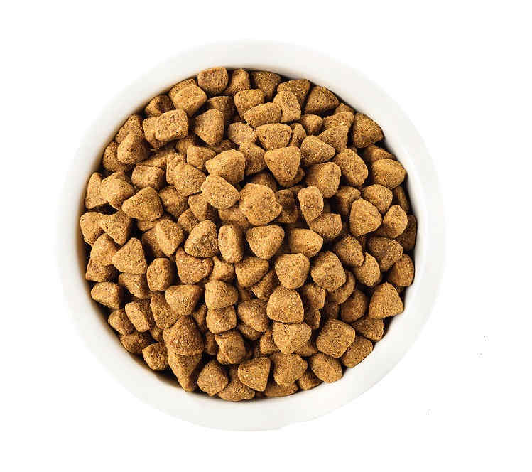 A bowl full of grain-free dry dog kibble