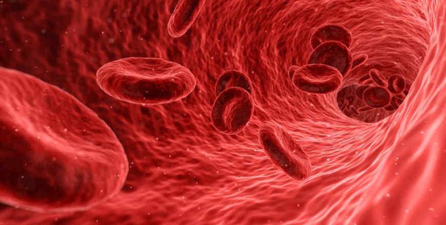 Red blood cells destroyed