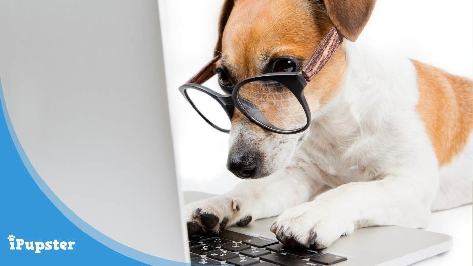 Highly intelligent dog wearing glasses working on laptop