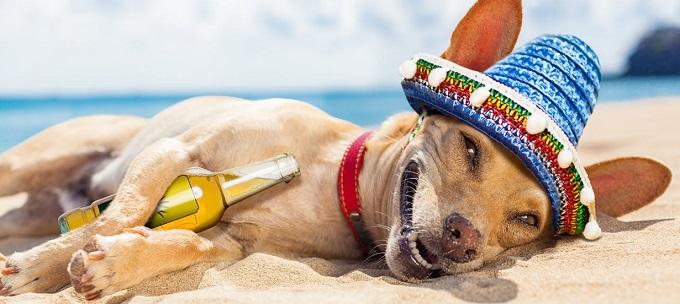 cute dog wearing a spanish hat