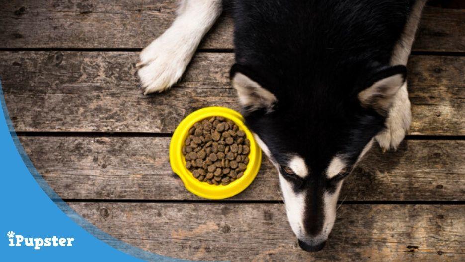 Dog refusing to eat kibble