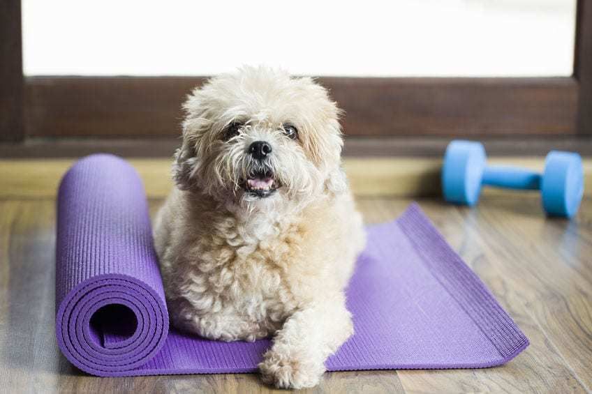 Dog sitting on a yoga mat