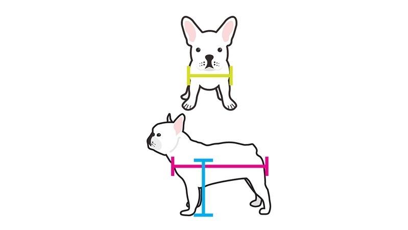 Measuring your pet