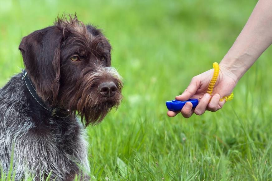 Female training young dog with clicker