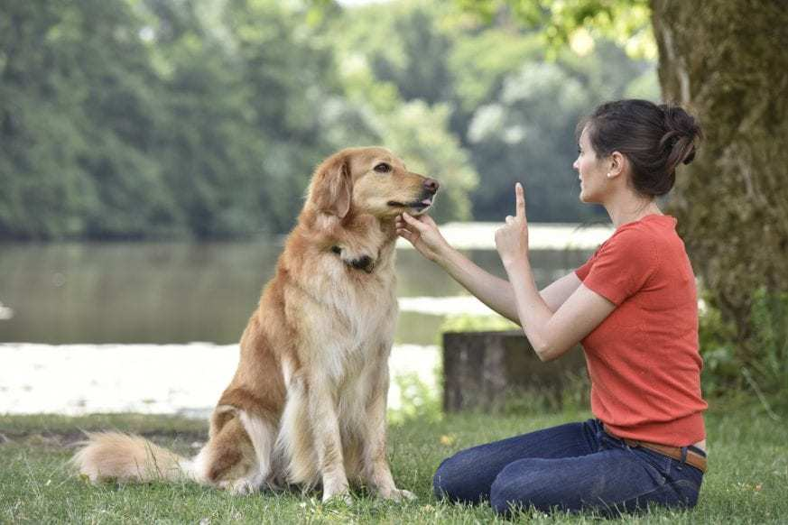 Being consistent in dog training