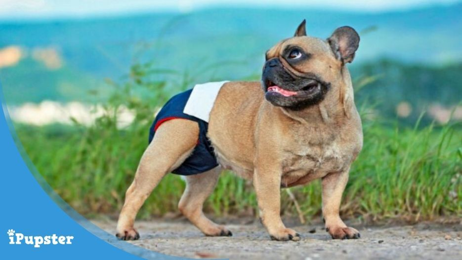 homemade diapers for dogs