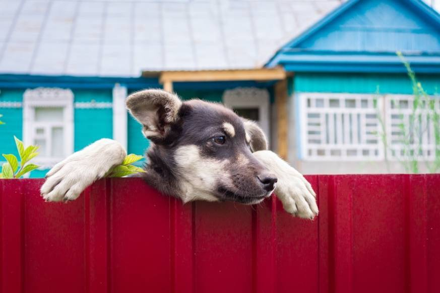 Cute puppy looking out over the fence