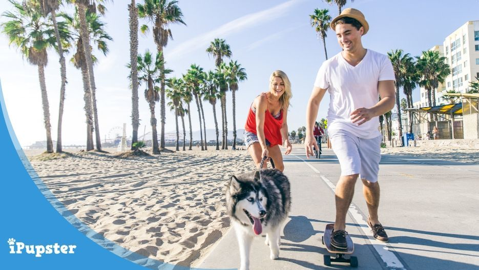 Young couple skateboarding with their Husky Dog on the Beach