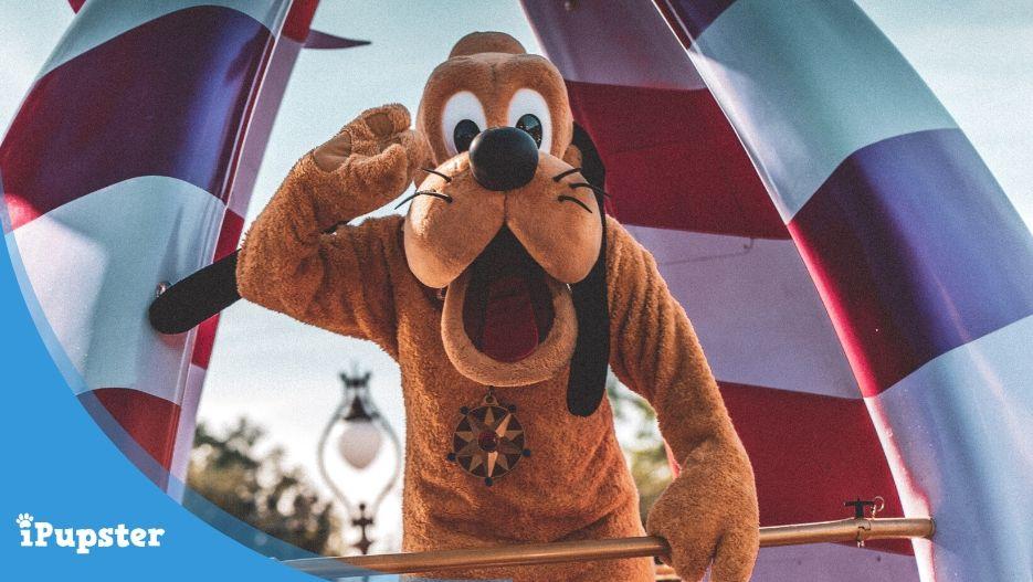 Best Disney Dog Names Pluto, Dodger, Lassie