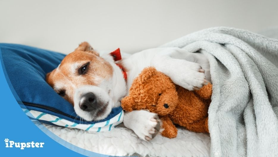 Soothing toys for anxious puppies