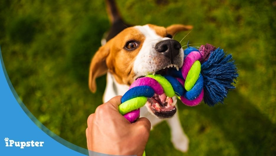 Durable Homemade Dog Toys