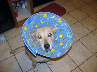 DIY Plastic cone for dogs