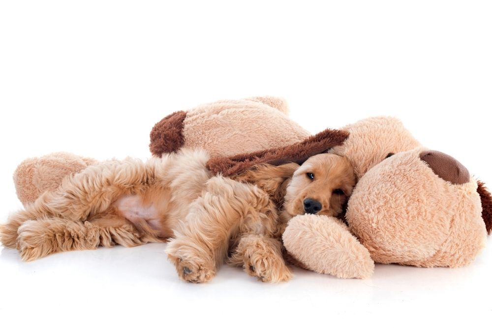 Puppy dog sleeping with plush toy