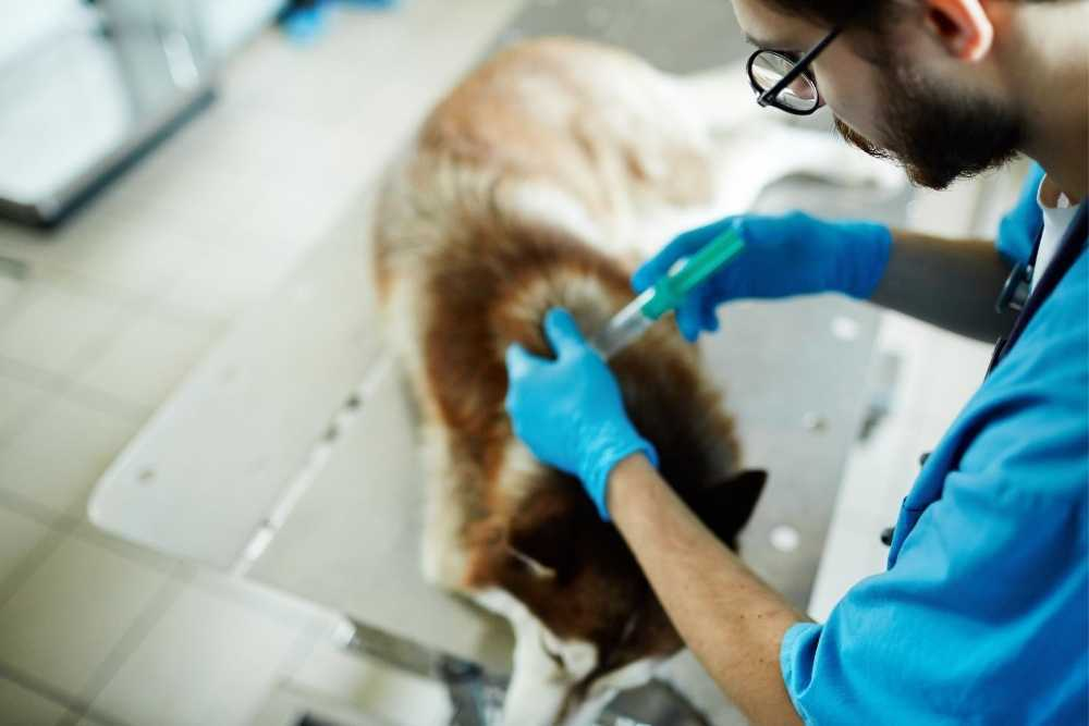 Sick dog getting a syringe injection by a Vet at the hospital