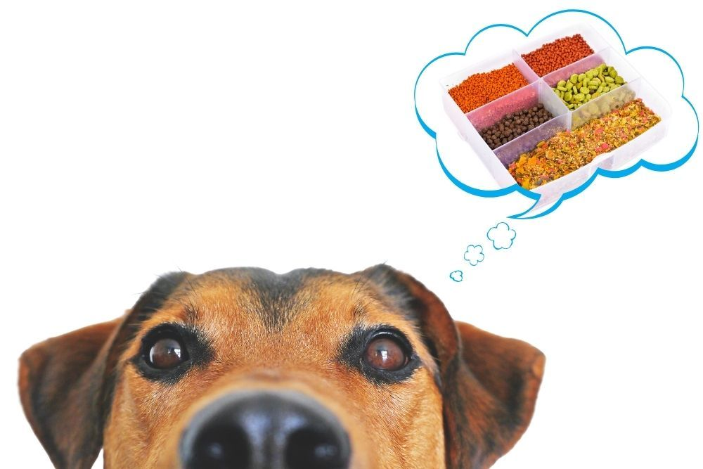 A cute dog looking at fish food varieties from pellets to worms