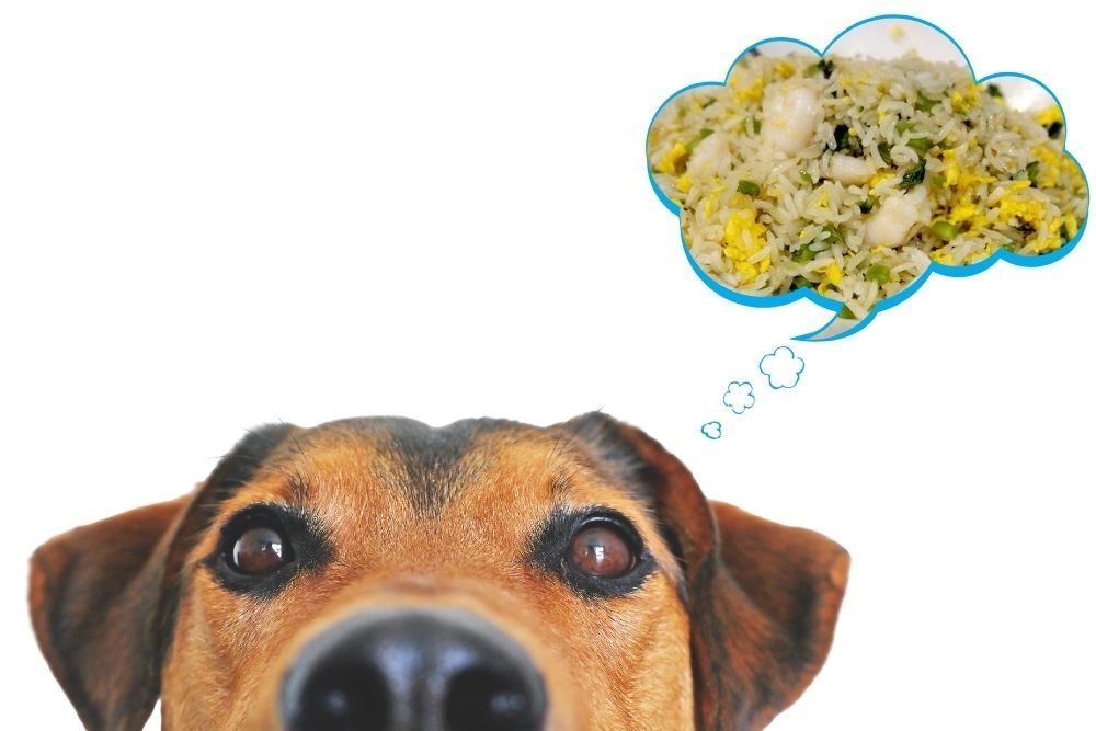 Is Friend Rice Safe For Dogs To Eat?
