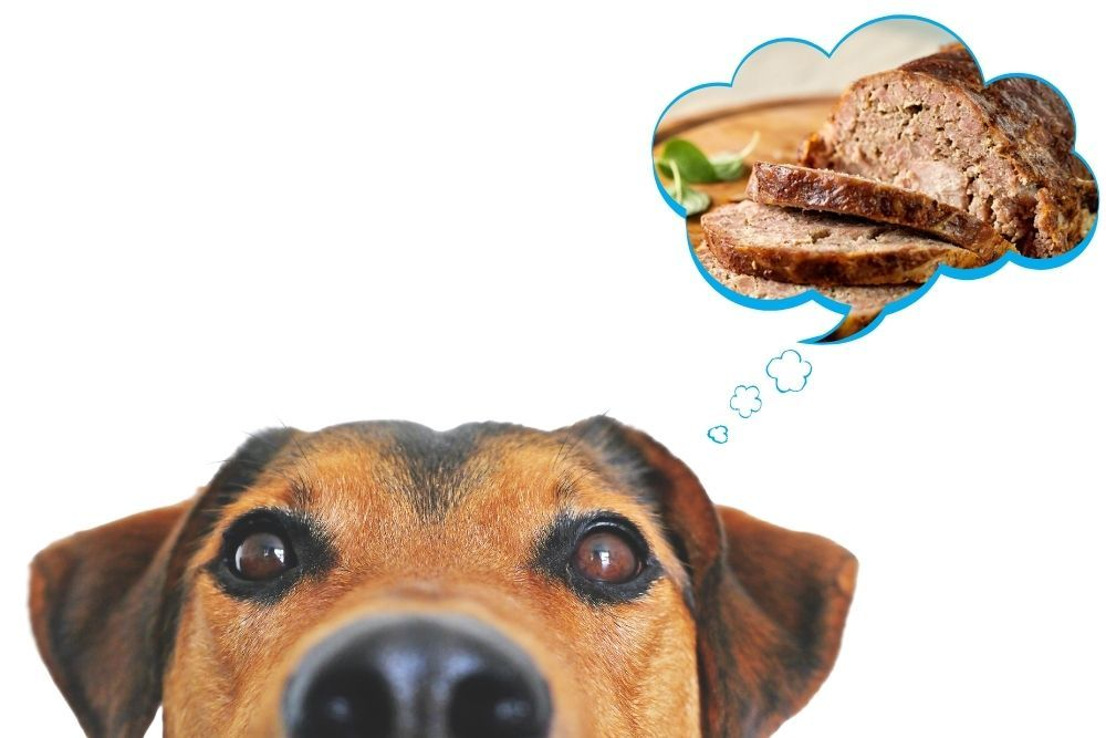 Is Meatloaf Safe for Dogs To Eat?