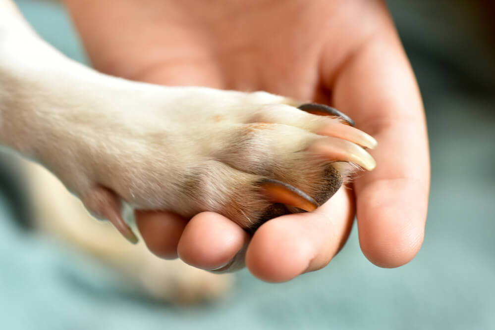 A Dog paw in a human hand