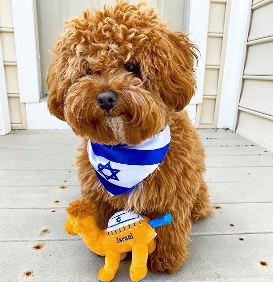 Yiddish dog