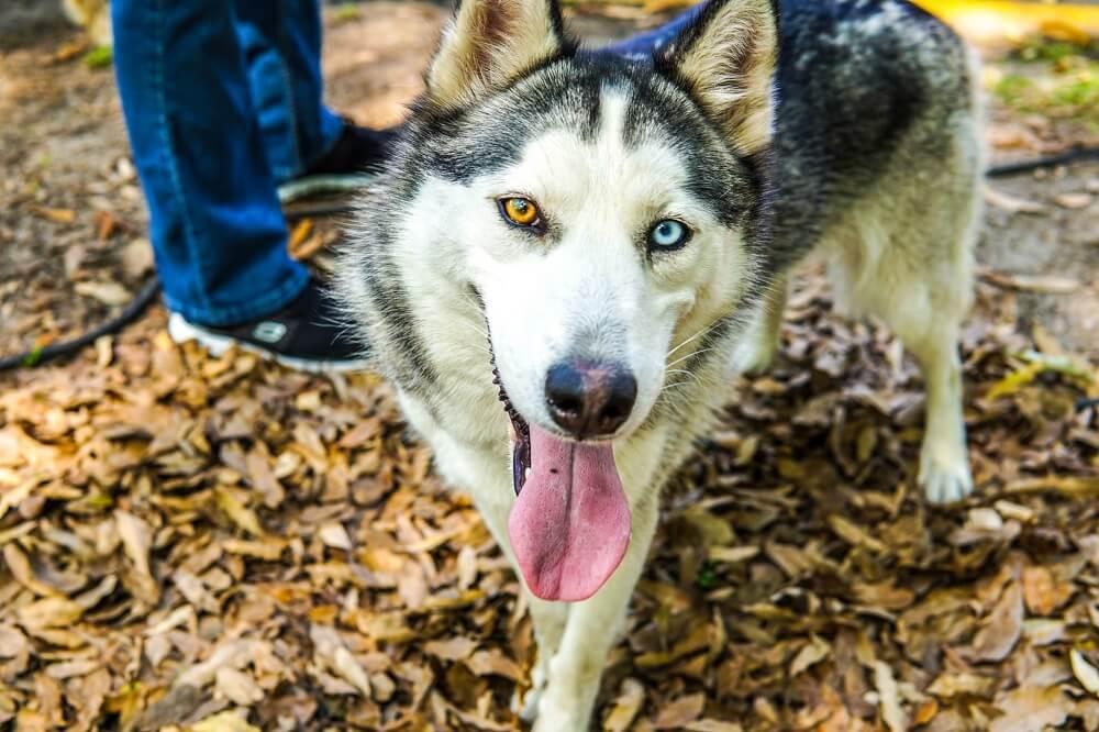 Names for exotic Alaskan and Siberian Husky dog breeds