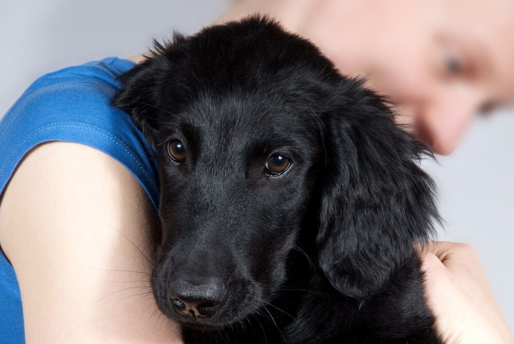 A woman lovingly holding a black puppy.