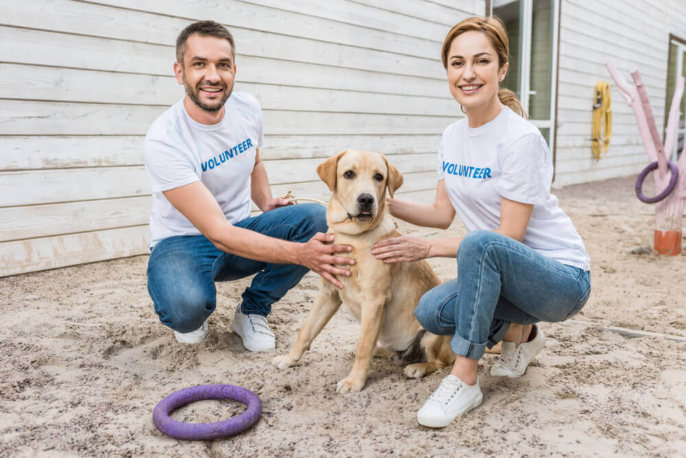 Smiling volunteers with a labrador at a dog rescue and shelter group
